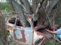 bug tree