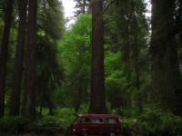 Redwoods /Vanagon