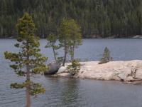 Ebbetts pass- Lake Alpine CA
