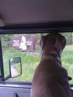 another shot of canine co-pilot