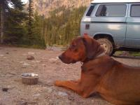 Odin at Gallaher Head Lake Campsite