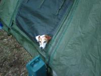camp dog