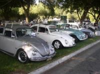 Just one of the Beetle lineups