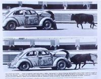Herbie bullfighting