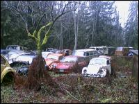 VW's deep in the forest