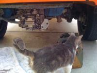 Cat Mechanic