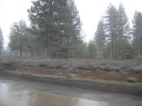 It was snowing when we drove over Donner Pass through the Sierras
