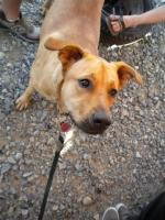 Womack's stoner dog Otis