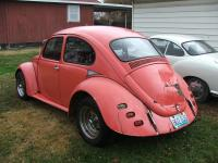68 pink bug