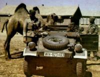 Kubelwagen in Africa
