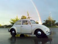 65 panama beige bug