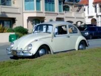 65 panama beige beetle