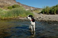 84 Westy Camping w/dog