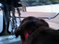 dog in the bus