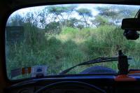 Iron Lion in the Serengeti