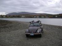 Bug on Sandbar