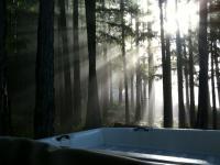 morning redwoods