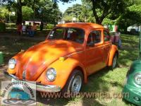 Volks Bug |974