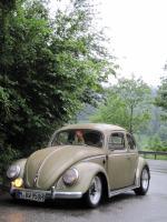 57 Oval beetle