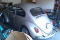 1966 bugs