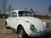 White Bug