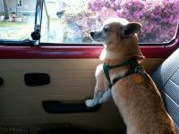 dogs/VWS