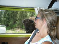 more buffalos