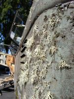 I'm lichen this picture!