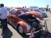 Ragtop Beetle