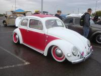 Pink Oval Window Beetle