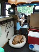 Our dogs in Our Van