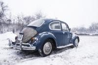 Beetle in the snow