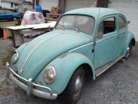 sitting since 1999 Turkis Beetle