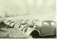 Bug grave yard