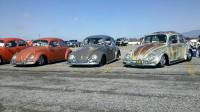 low beetles at pomona