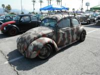 Camo Oval-Window Beetle