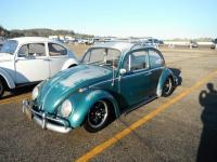 Java Green Beetle