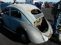 Oval Window Beetle
