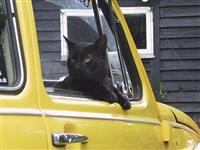 VW Cats